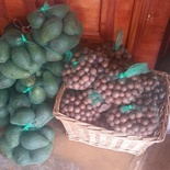 Macadamia and Avos for sale, Africa Silks Farm